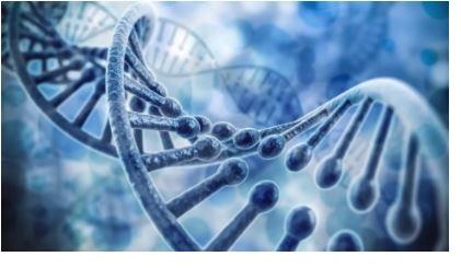 RNA purification kit